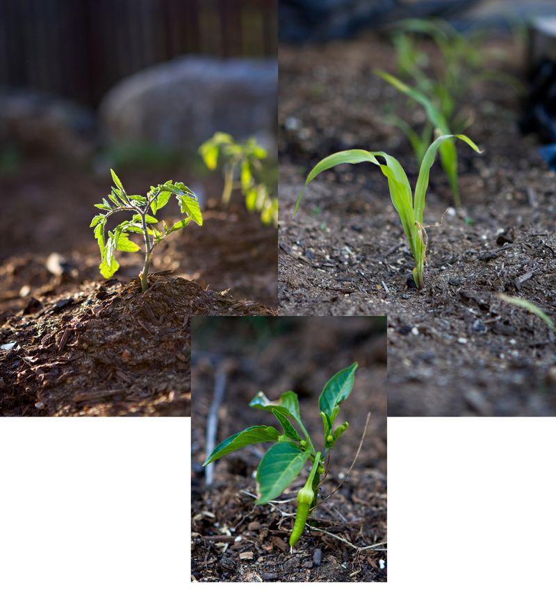 Gardencollage2